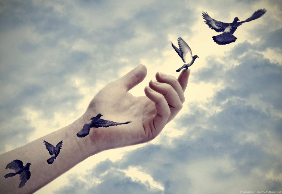 main oiseaux liberte
