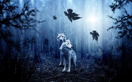 loup blanc forêt automne