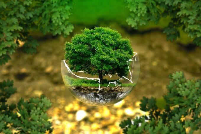 Naissance d'un arbre
